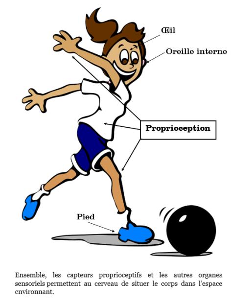 Proprioception Lunettes à prismes Système vestibulaire Semelles proprioceptives